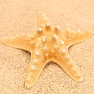 Morske zvijezde